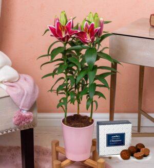 Prestige House Plants