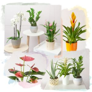 Bunches House Plants